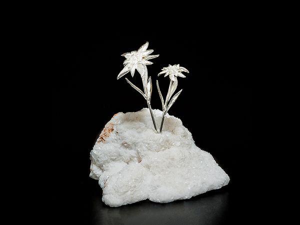 Stella alpina con fiori su minerale